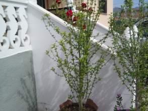 Finca rústica en Cortes-Huertas
