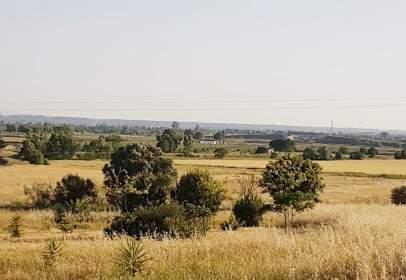 Rural Property in Torremayor