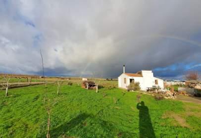 Rural Property in El Perdigón