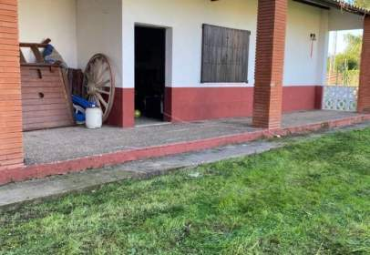 Finca rústica en Paraje Olivares del Carrasco