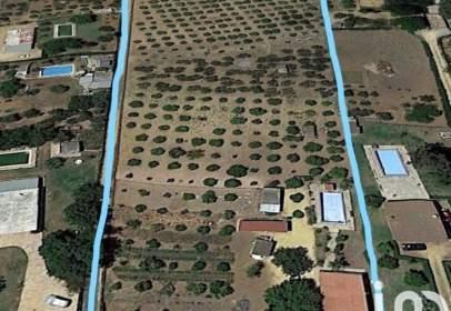 Land in Borde de La Carretera