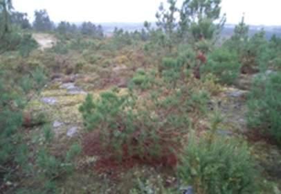 Terreno en calle Centro Lamas Cardon Pg. 148 Par. 326
