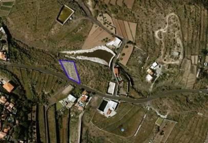 Terreny a Las Cuevecitas-Malpaís