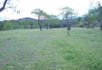 Land in calle de la Muela, nº La m