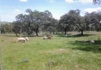 Rural Property in El Pozuelo
