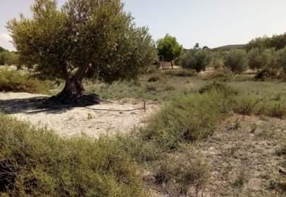 Terreno en Paraje Rubiales